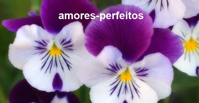 amor-perfeito2
